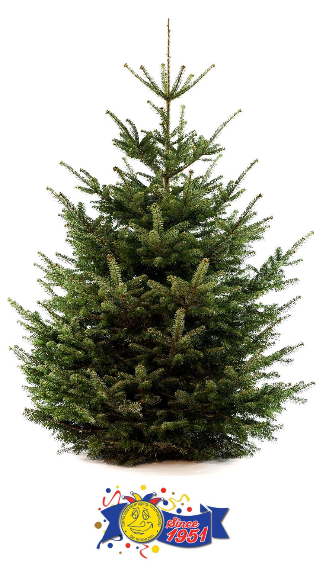 Ophalen Kerstboom C V De Smoezen